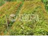 Сетка для защиты деревьев и кустов «Фермер», 3х3 м