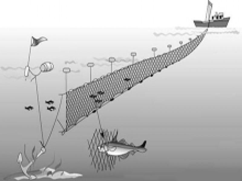 ловля рыбы сетями ячейка